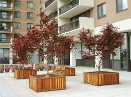 large tree planter box
