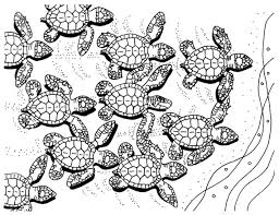Small Picture Baby Sea Turtles coloring page embroidery pattern sea turtle