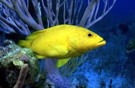 Животный мир морей и океанов фото глубина океанов морей  Животный мир морей и океанов