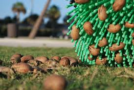 How Long Can Pecans be Left on the Ground?