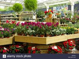 inside a homebase garden centre