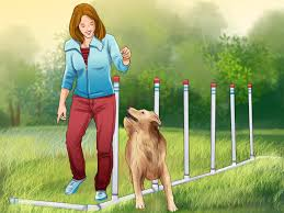 how to build a dog agility course