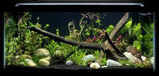 Image result for Fish tanks need to be cleaned periodically
