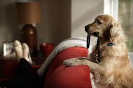 Keeping Your Dog f The Beloved Furniture Dog Training Basics
