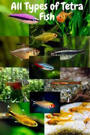 Pin on Fishkeeping, Aquarium, Planted Tank and fish