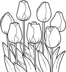 Small Picture Tulip Coloring Pages Printable Tulip Flower Coloring Page