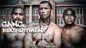 Obama Allowed Ms 13 Gang Warfare To Enter The United States Sexy