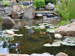 Image result for pond ecosystem picture