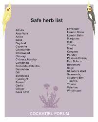 Cockatiel Diet Chart Safe Herbs For Cockatiels Cockatiel Pet Birds Parrot Toys