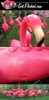 garden flamingos. Home Of The Original \ Garden Flamingos