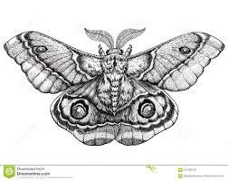 искусство татуировки бабочки татуировка Dotwork Suraka Antherina