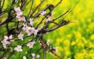 """描写景物的好句:描写""""春天的古诗词""""名句摘录 - leebapa - leebapa的博客"""