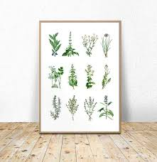 Printable Culinary Herb Chart Kitchen Herbs Chart Herbs And Spices Printable Herbs And