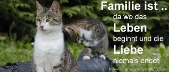 Lustige Familien Sprüche Kurze Gute Zitate Witzige Wahre Weisheiten