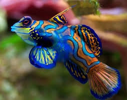 Интересные факты о рыбах Интересные факты из жизни факты про рыб