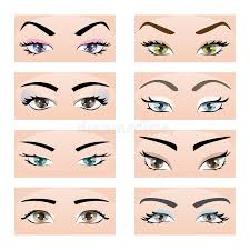 set of female eyes and eyebrows vector ilration eps10 stock vector ilration