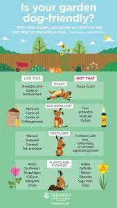 common garden dangers for dogs