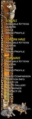 savannah cat chart savannah cat faq
