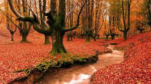 Nature Fall Autumn (1920x1080 ...