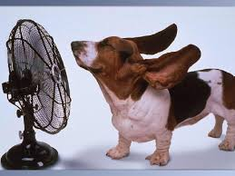 6 Tips to Keep Your Pet Cool For The Summer – DogsRUsBoston