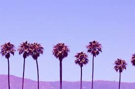 Palm Trees Tumblr Photography Desktop Backgrounds for Free HD