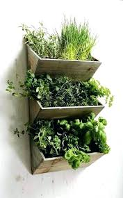 best herbs to grow inside best way to plant herbs indoors ideas for growing herbs right in your kitchen