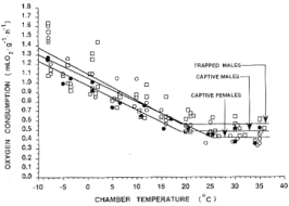 Raccoon Classification Chart The Project Gutenberg Ebook Of Metabolic Adaptation To