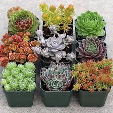 Small Picture Best 25 Succulent rock garden ideas only on Pinterest Succulent