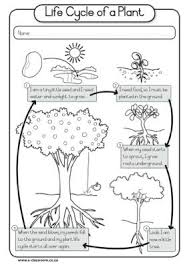 Small Picture The 25 best Plant life cycles ideas on Pinterest Teaching