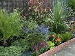 low maintenance outdoor potted plants florida garden design books yard