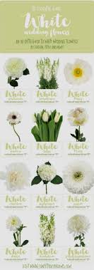 awesome white flower names list photos best designer party wear