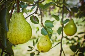 Go And Bear Fruit CatholicFamily Missions CompanyTree Bearing Fruit