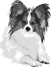パピヨンの白黒モノクロでかっこいい犬の無料イラスト68055 素材good