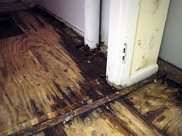 a wood sub floor ruined by basement flooding