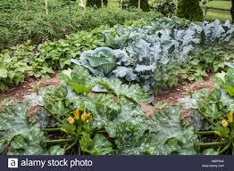 vegetable garden on an amish farm bellville pennsylvania usa