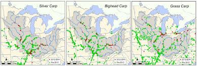 Kentucky Department Of Fish Wildlife Asian Carp Information