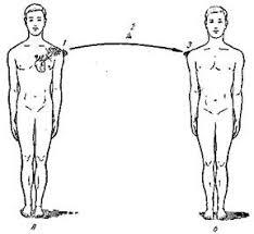Реферат Инфекционные заболевания ru К ним относятся венерические болезни передающиеся половым путем бешенство и содоку заражение которыми происходит при укусе больными животными столбняк
