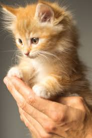 cute kittens wallpapers for mobile. Simple For Download Now Intended Cute Kittens Wallpapers For Mobile