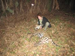 dr morato big cats and wildlife habitat conservation program by cat research in essay