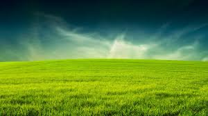 grass and sky backgrounds. Beautiful Grass Landscape Wallpaper Photos HD #5446 . And Sky Backgrounds
