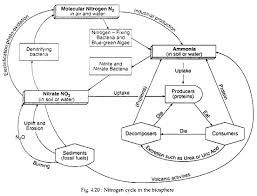 Nitrogen Cycle With Diagram Ecology