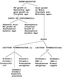 Microbiology Unknown Test Flow Chart Unknown Bacterial Identification Chart Www