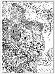 Small Picture Printable Iguana Adult Coloring Pages Realistic Coloring Pages