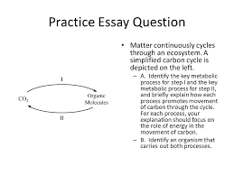 exam overview and advice ppt video online  practice essay question