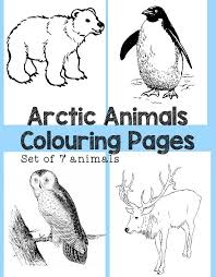 Small Picture Arctic Animals Colouring Pages In The Playroom
