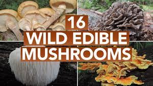 Florida Mushroom Identification Chart 16 Wild Edible Mushrooms You Can Forage This Autumn