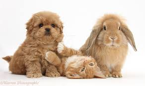 kittens and puppies and bunnies and hamsters. Modren Hamsters Cute Puppies And Kittens Bunnies Hamsters  Photo24 Throughout Kittens And Puppies Bunnies Hamsters Y