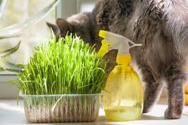 cat enjoys container of grass on the windowsill