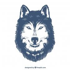 Drawn Wolf Hand Drawn Wolf Illustration Stock Images Page Everypixel