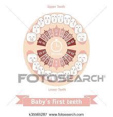Baby Teething Chart Clip Art K35565287 Fotosearch